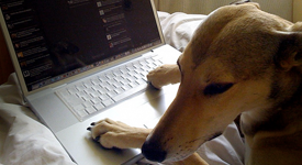 Blog Writing - Ghostwriting Dos and Don'ts